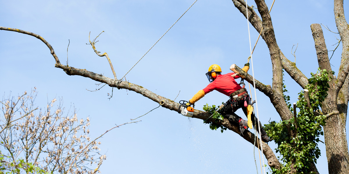Arborists - what do they do?
