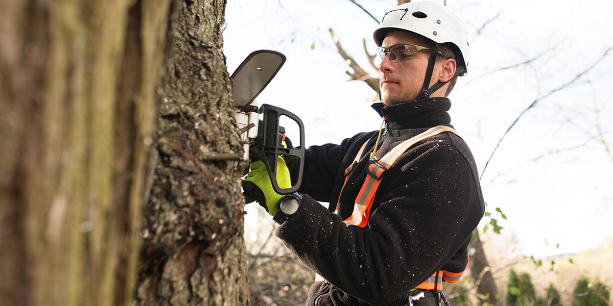 Choosing and Using an Arborist