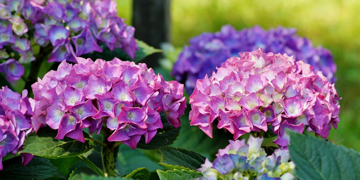 Winter Gardening Tips for March and April in New Zealand