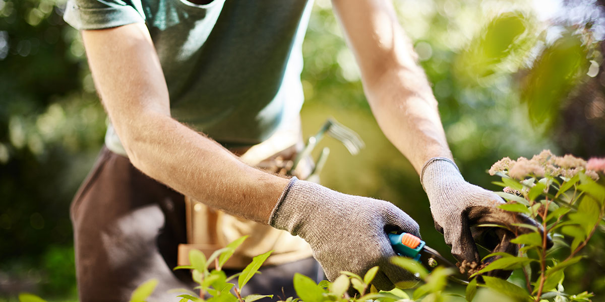 Want to Hire A Gardener for One Off Or Regular Work?