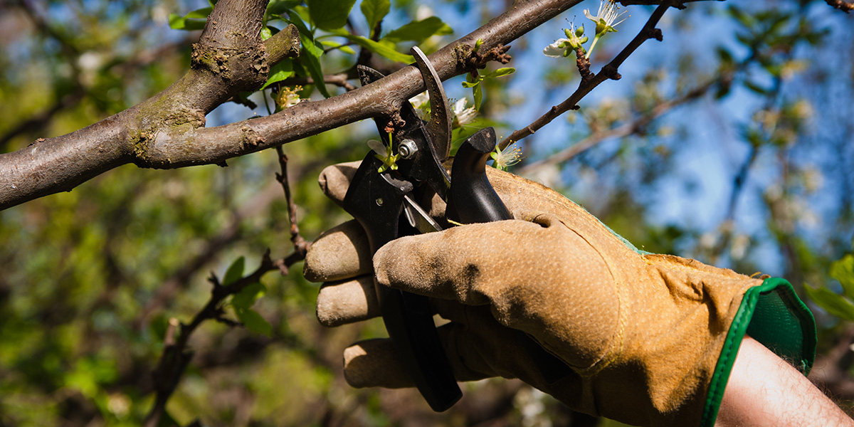 8 Ways to Protect Your Trees Before Heading Into Winter