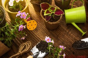 shutterstock_452856799 Garden tools and flowers in sunshine-1