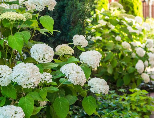 Achieve Success with Our Spring Landscaping Guide