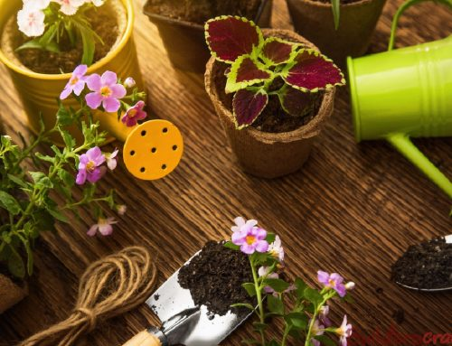 10 Essential Spring Garden Maintenance Jobs You Need To Know