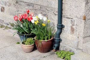 downpipes and guttering