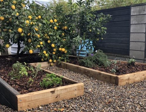 Garden Revamp: How Chris and Rochelle Transformed This Small Space