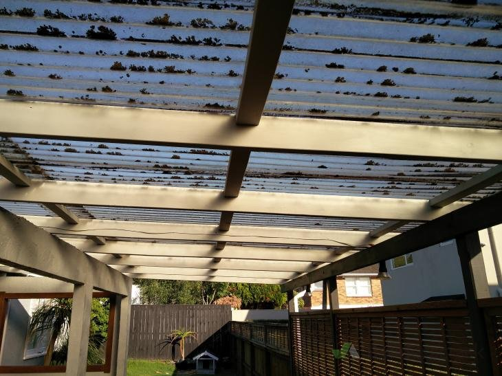 Pergola Pvc Roof Replace Sheets And Gutter Only