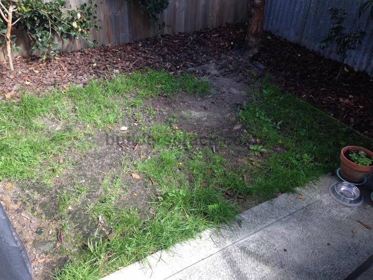Sow ready lawn 55236 builderscrack for Ready lawn christchurch