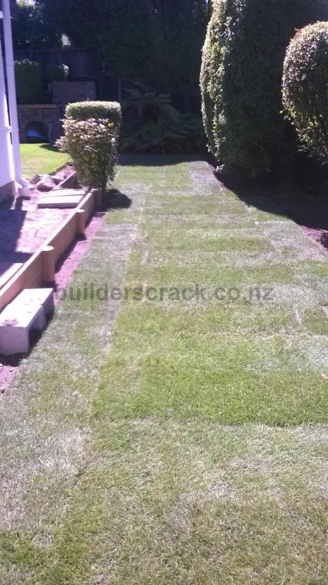 Grass ready lawn 80885 builderscrack for Ready lawn christchurch